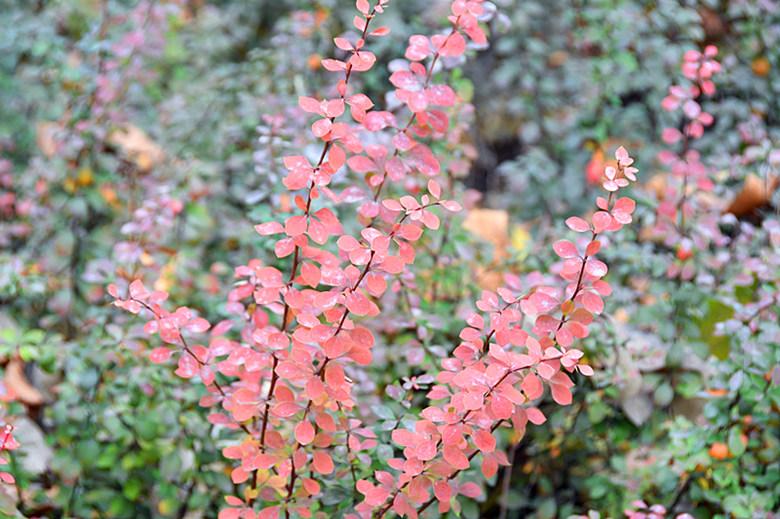 色彩斑斓秋韵浓 醉人美景在立恒