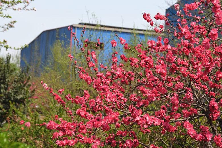 姹紫嫣红 领略钢城之美